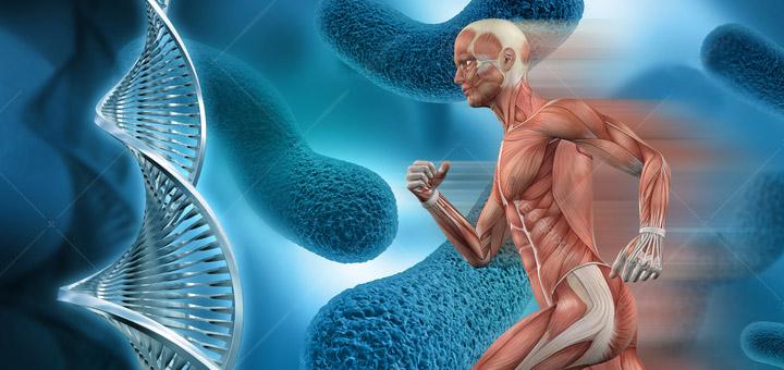 مقاله پاسخ هاي هورموني نسبت به فعاليت هاي ورزشي و تمرينات جسماني