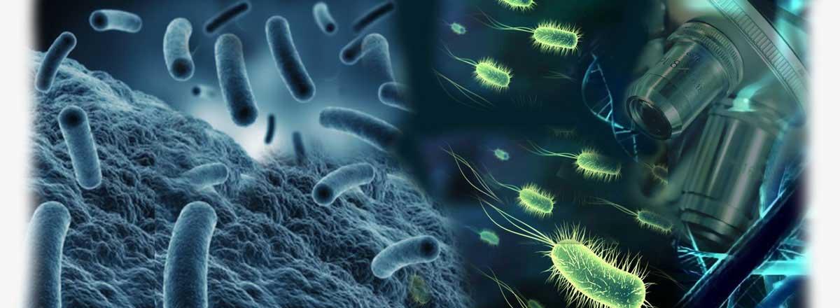 تحقیق و مقاله بیوتکنولوژی و تکنولوژی میکروبی و میکروبیولوژی صنعتی